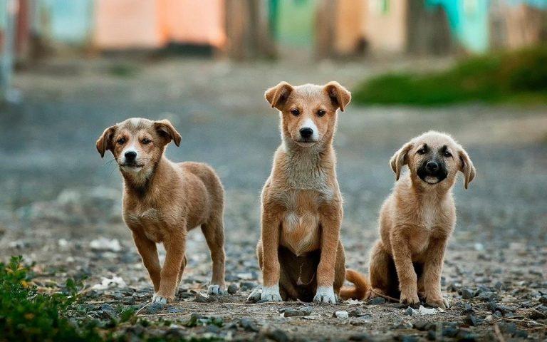 Kilka wskazówek dotyczących pielęgnacji zwierząt dla właścicieli psów.
